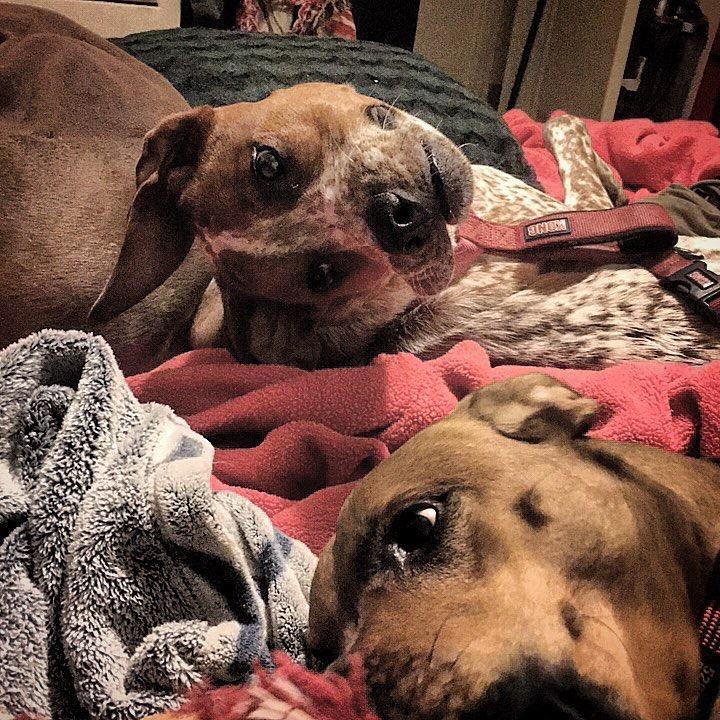 Reddit Gündemi Olan Bükülmüş Köpek Fotoğrafı!