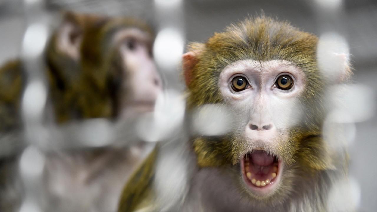 nasa maymunları öldürdü