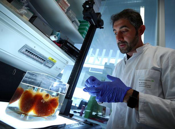 Bilim İnsanları, 'Transparan' İnsan Organları Üretti 3 – 1a3ff11c4747b105b84d3378fa0e10dbbb8da448