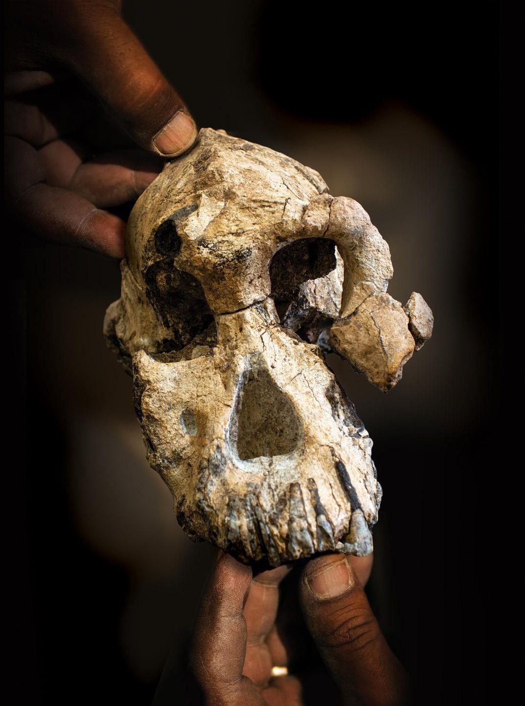 ilk-insan-kafatası