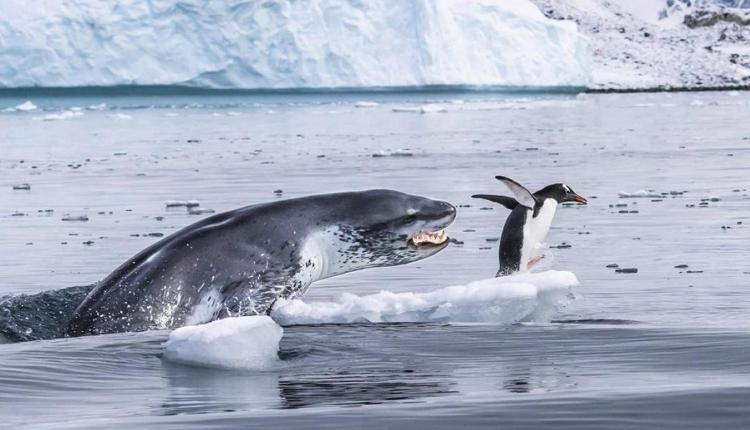 Vahşi Yaşam Fotoğrafçısı Yarışması'ndan en iyi fotoğraflar