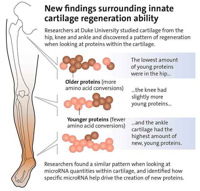 ayak bileği proteimn