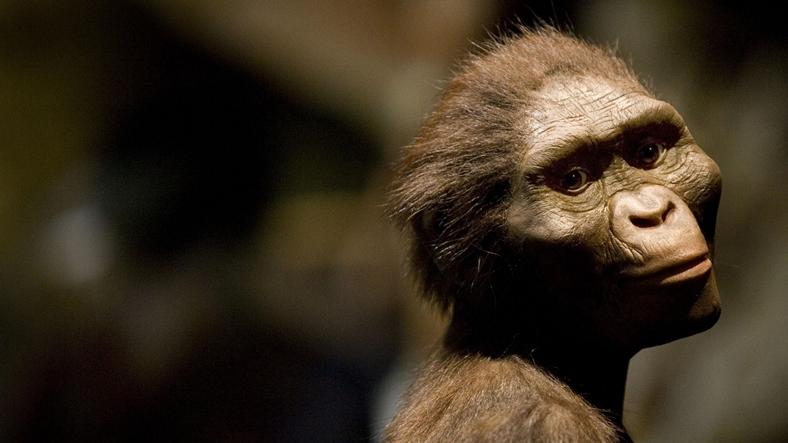 maymun ırkı