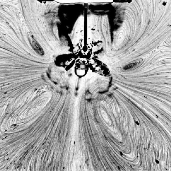su yüzeyinde arı hareketi
