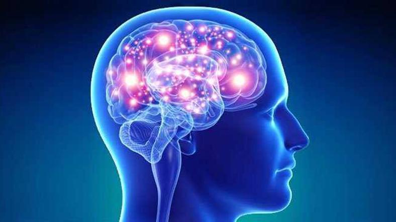 beyin bilgi