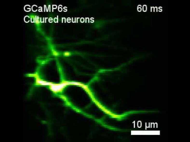 beyin sinyalleri
