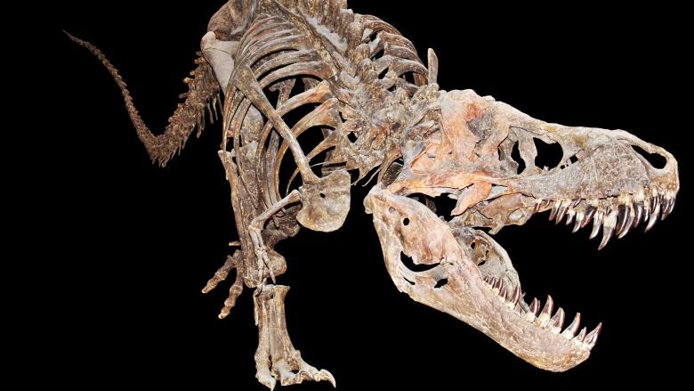 Dinozor