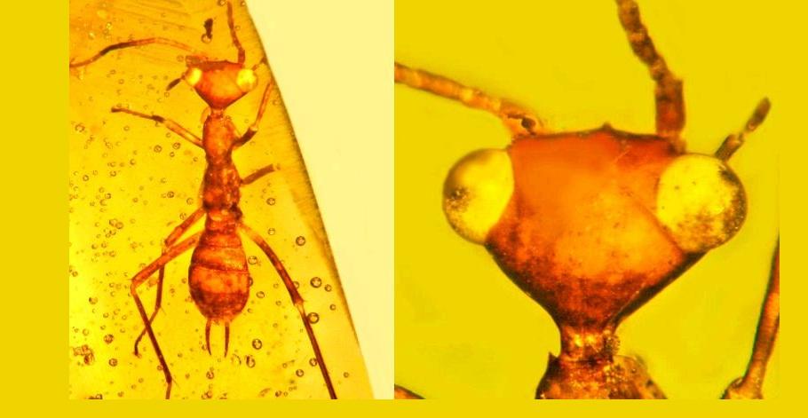 karınca fosil kehribar