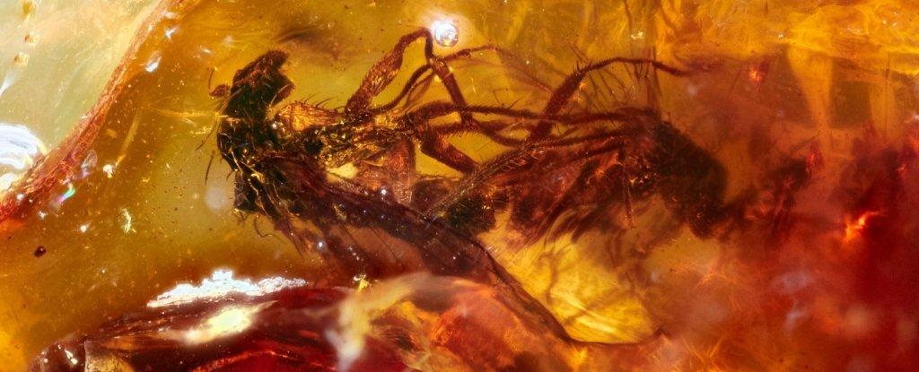 sinek çiftleşme fosil örneği