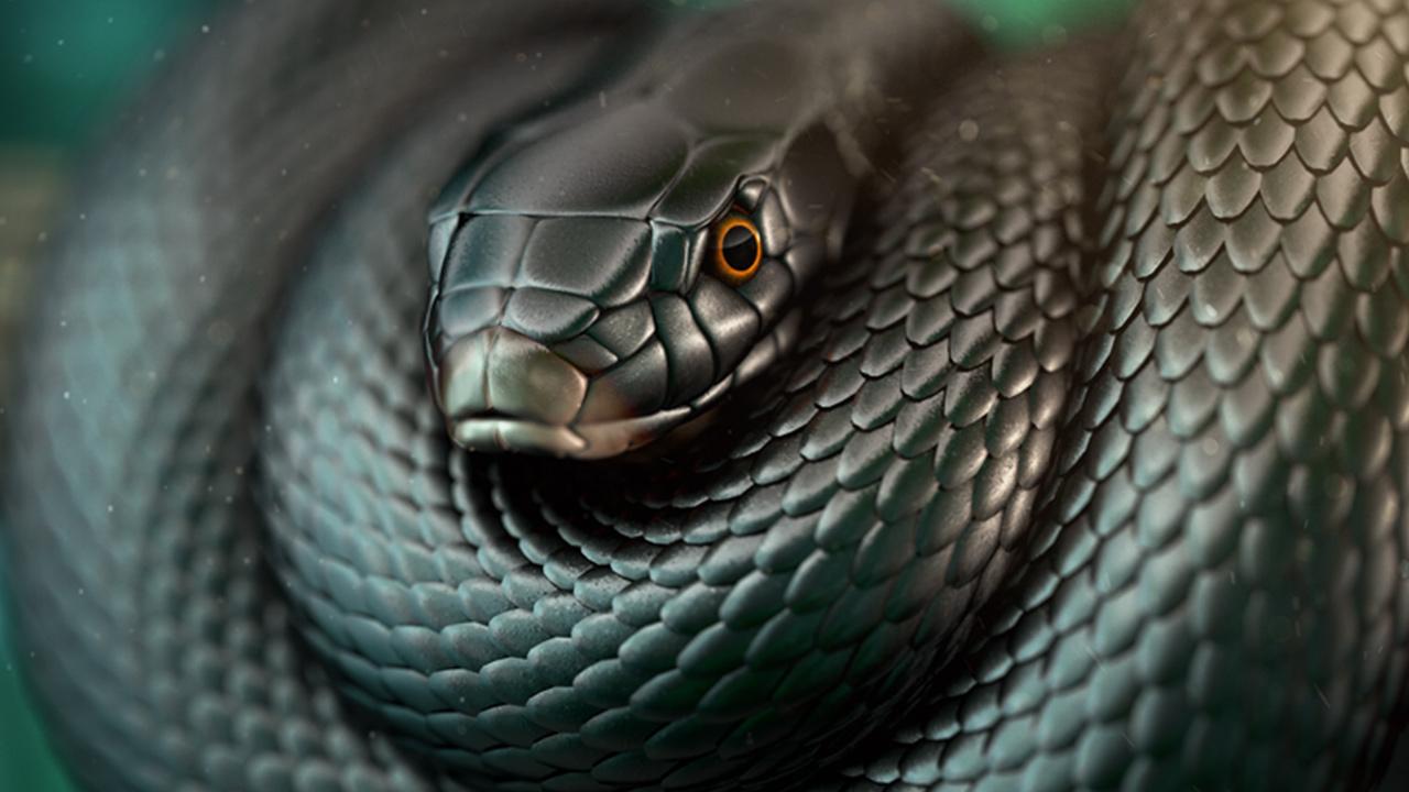 Kara Mamba yılanı