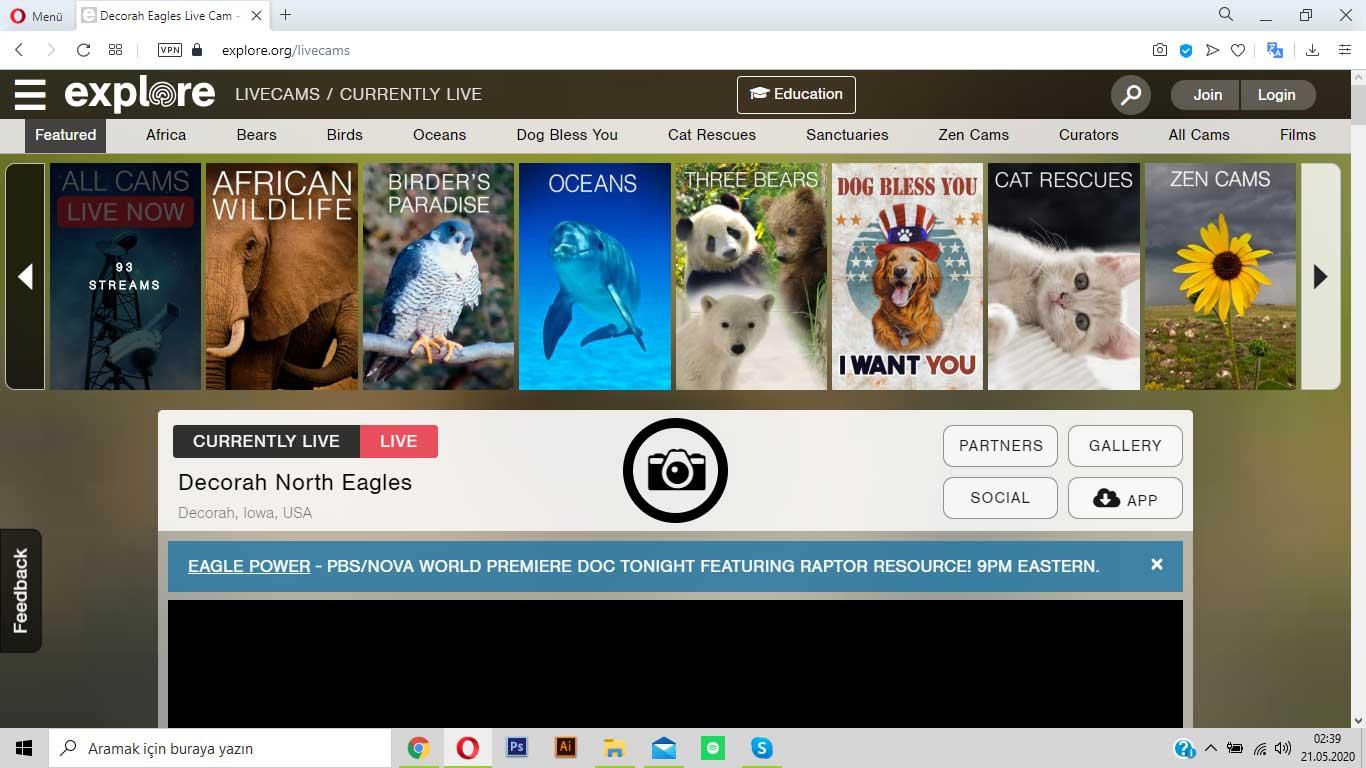 explore.org ile doğa hayatını keşfet