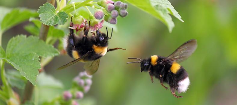 yaban arısı çiçek