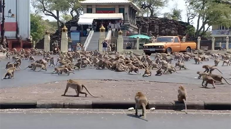 hindistan maymun çetesi