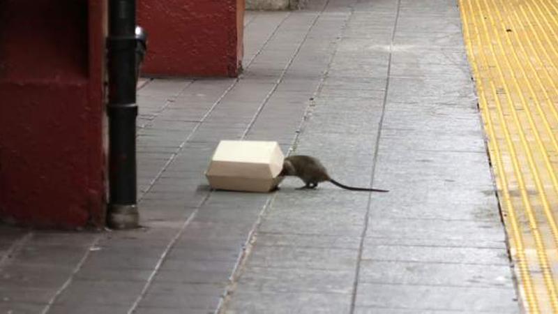 Sıçan ve yemek