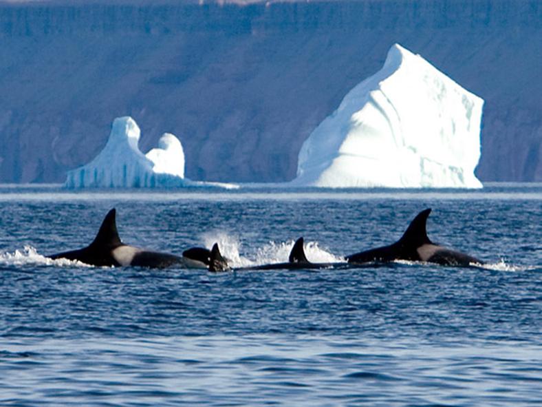 küresel ısınma canlıların habitatları