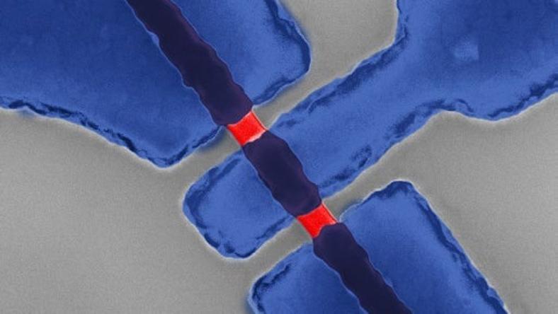 kuantum fazlı pil