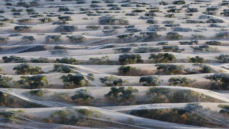 nanoplastikler, bitkiler