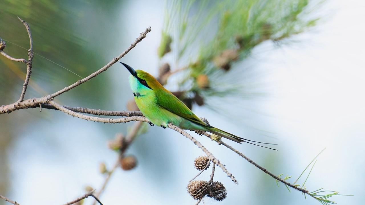 Kuş Sesleri