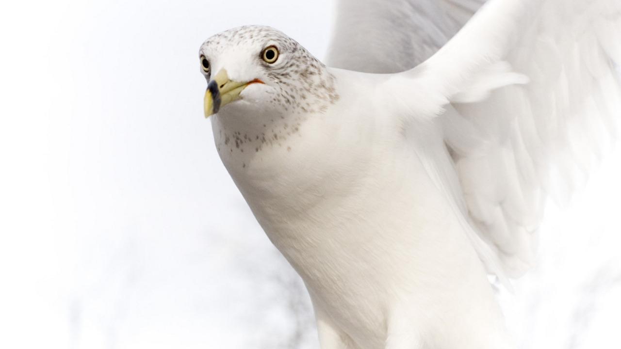 beyaz kuş