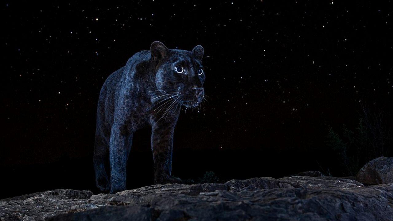kara leopar