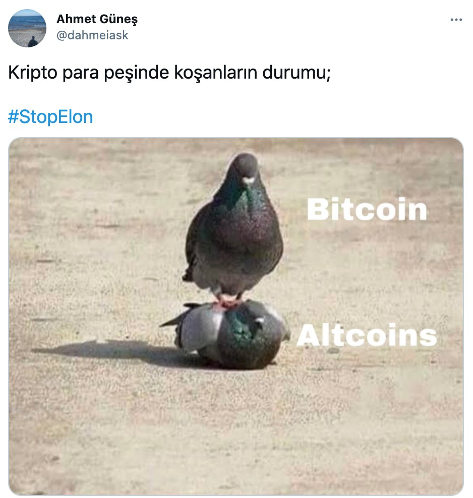 stop elon