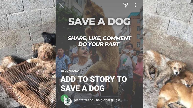 Save a Dog kampanyası instagram