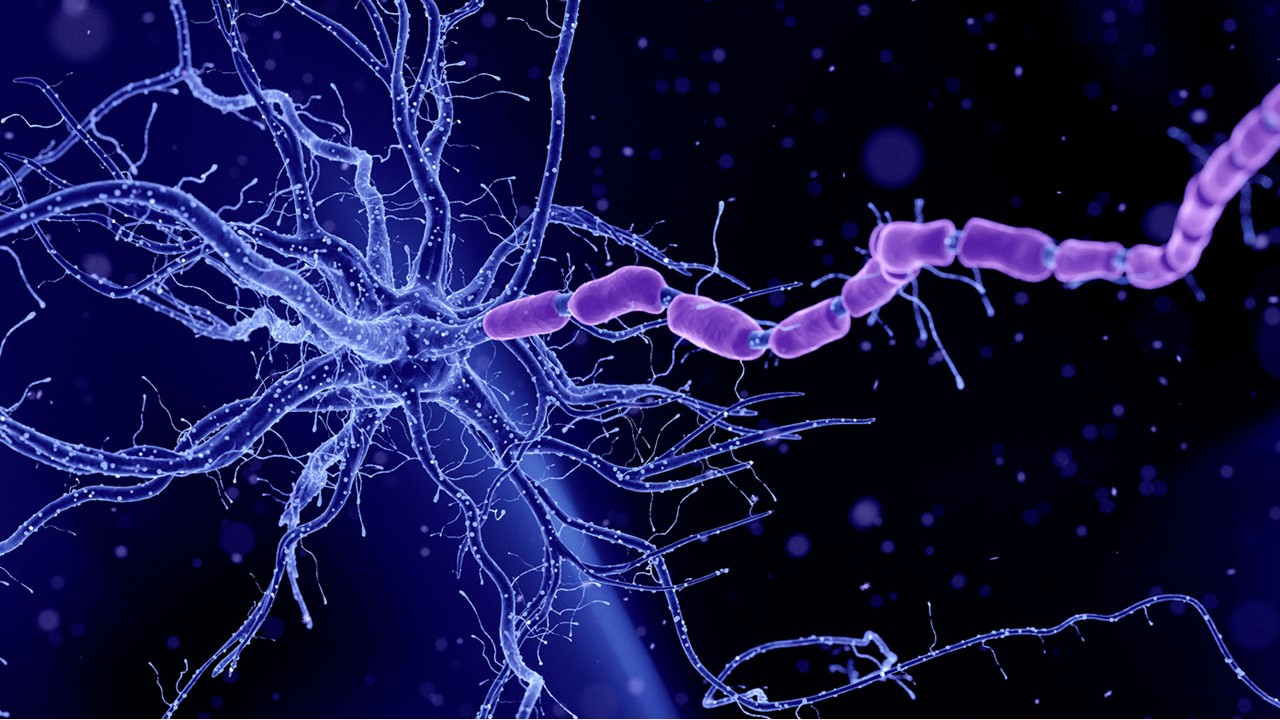 How to Increase the Secretory Protein BDNF in the Brain? 6