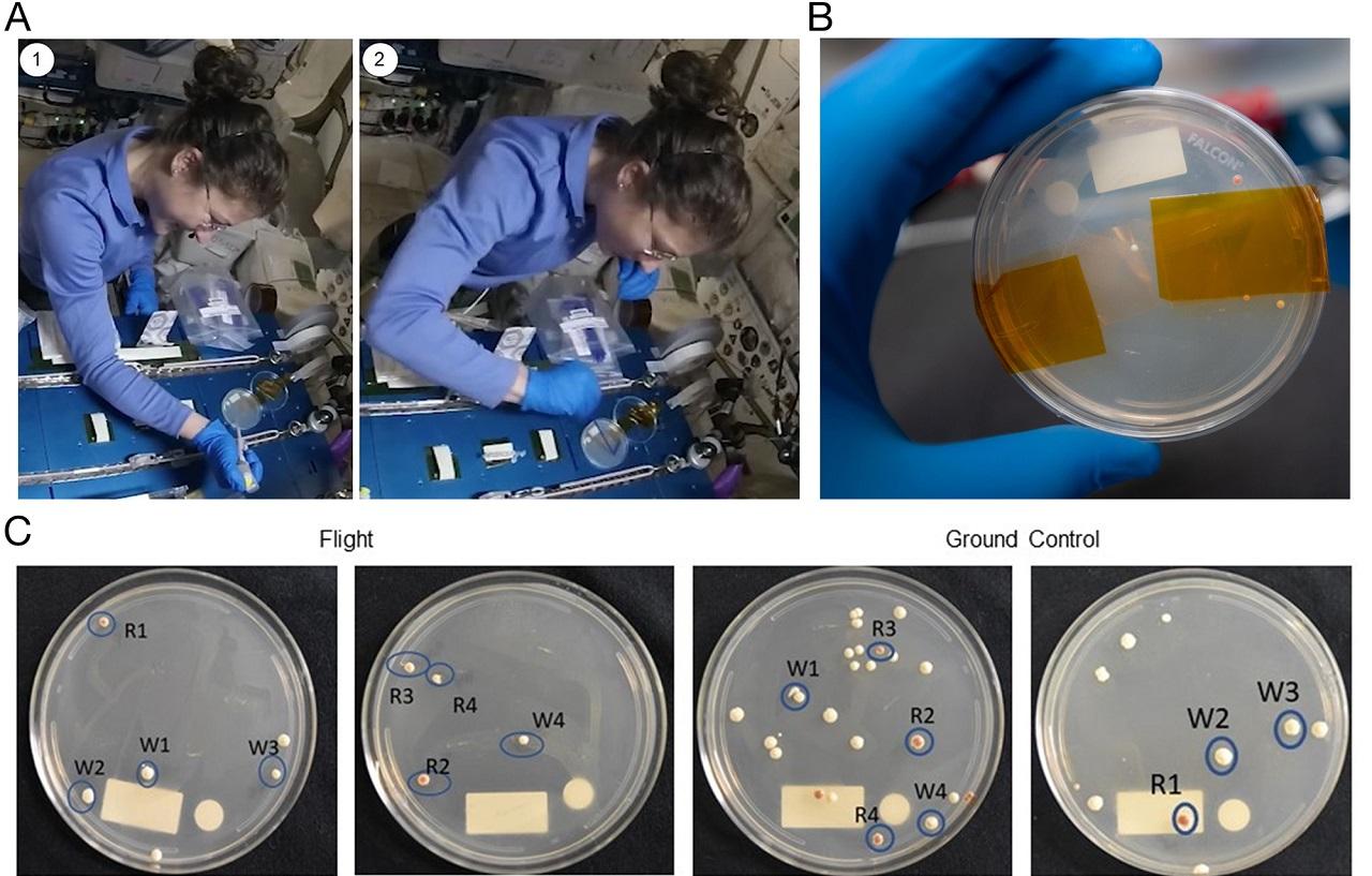 Astronauts Successfully Edit Genes in Space 2