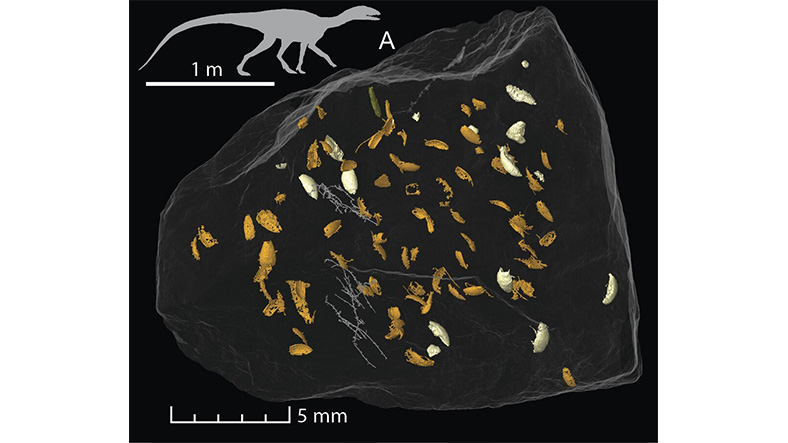 Insect Fossils Found in Lizard Feces 3