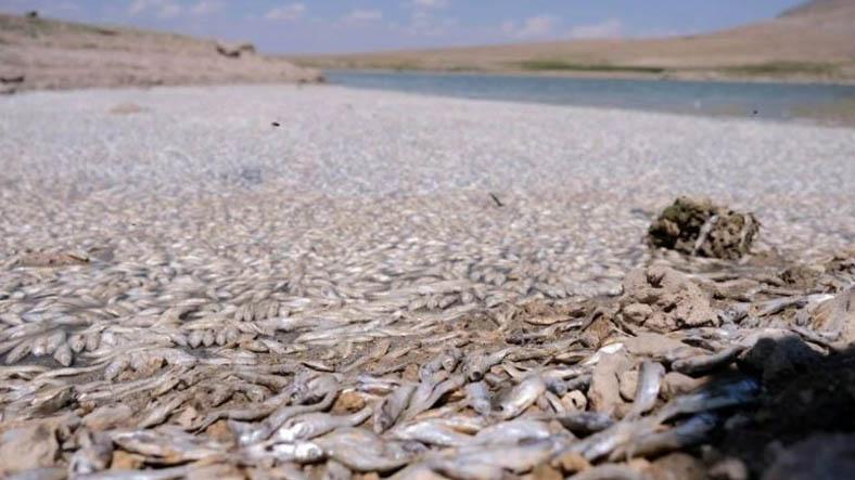Konya'da Kuraklık Nedeniyle Ölen Binlerce Balık, Korku Filmlerini Aratmayan Görüntüler Ortaya Çıkardı