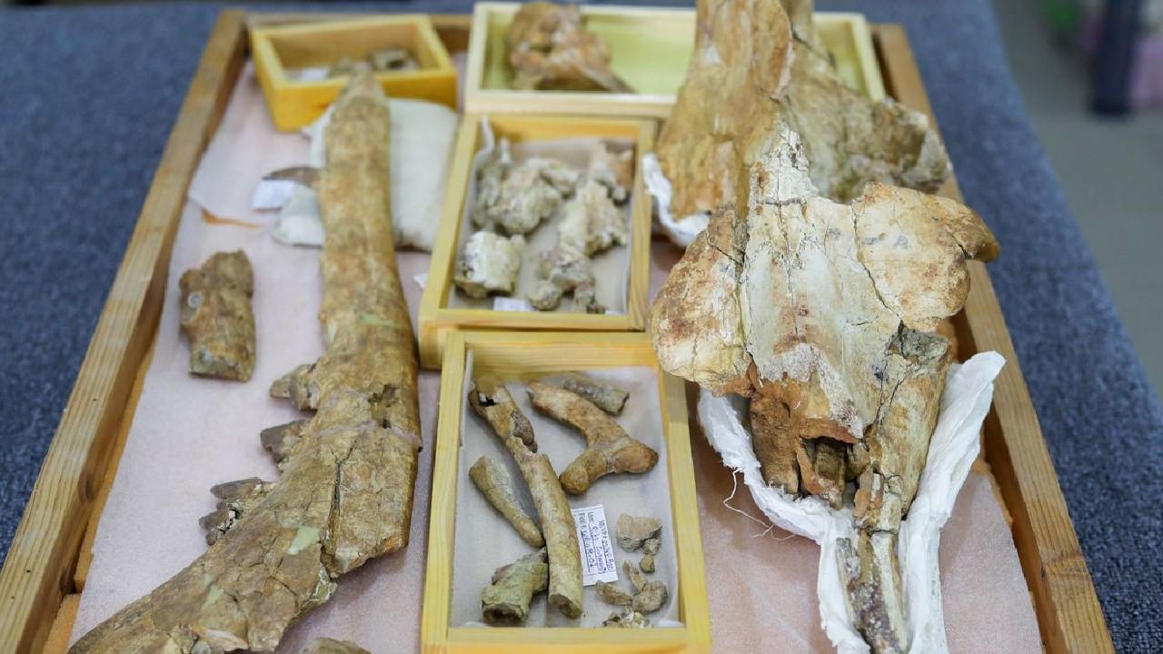 mısır 4 bacaklı balina iskeleti