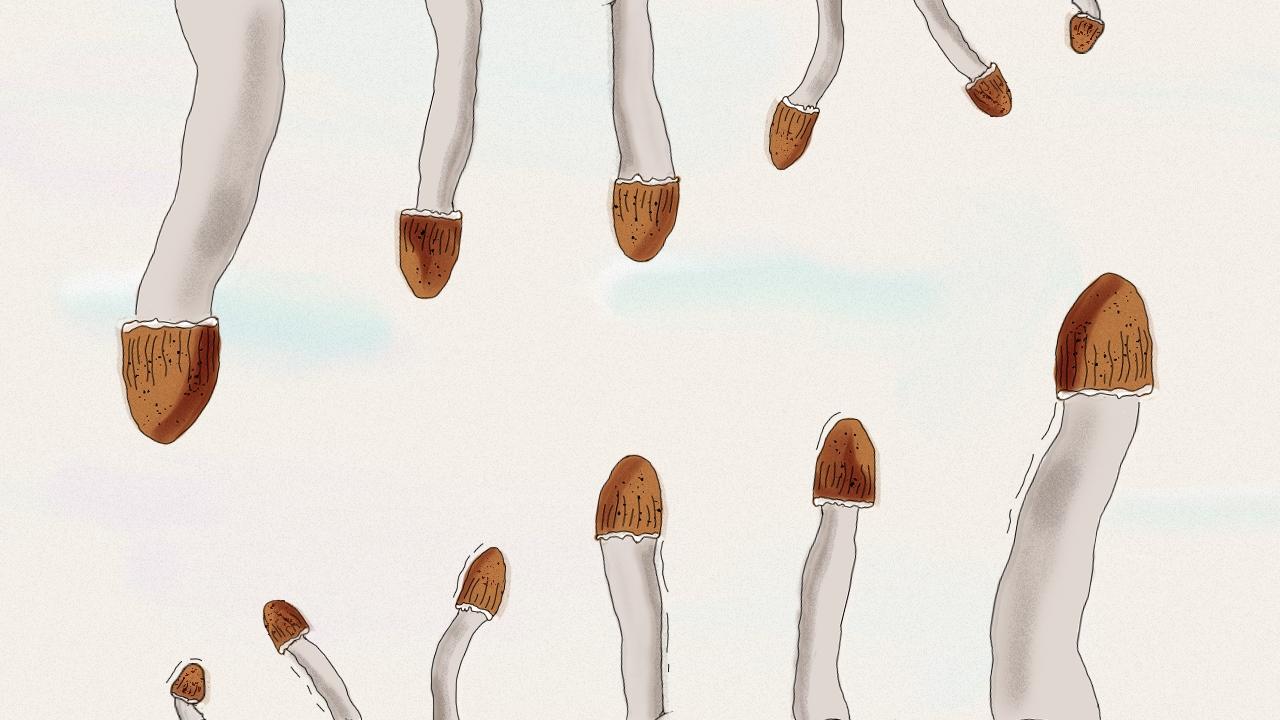 penis mantar