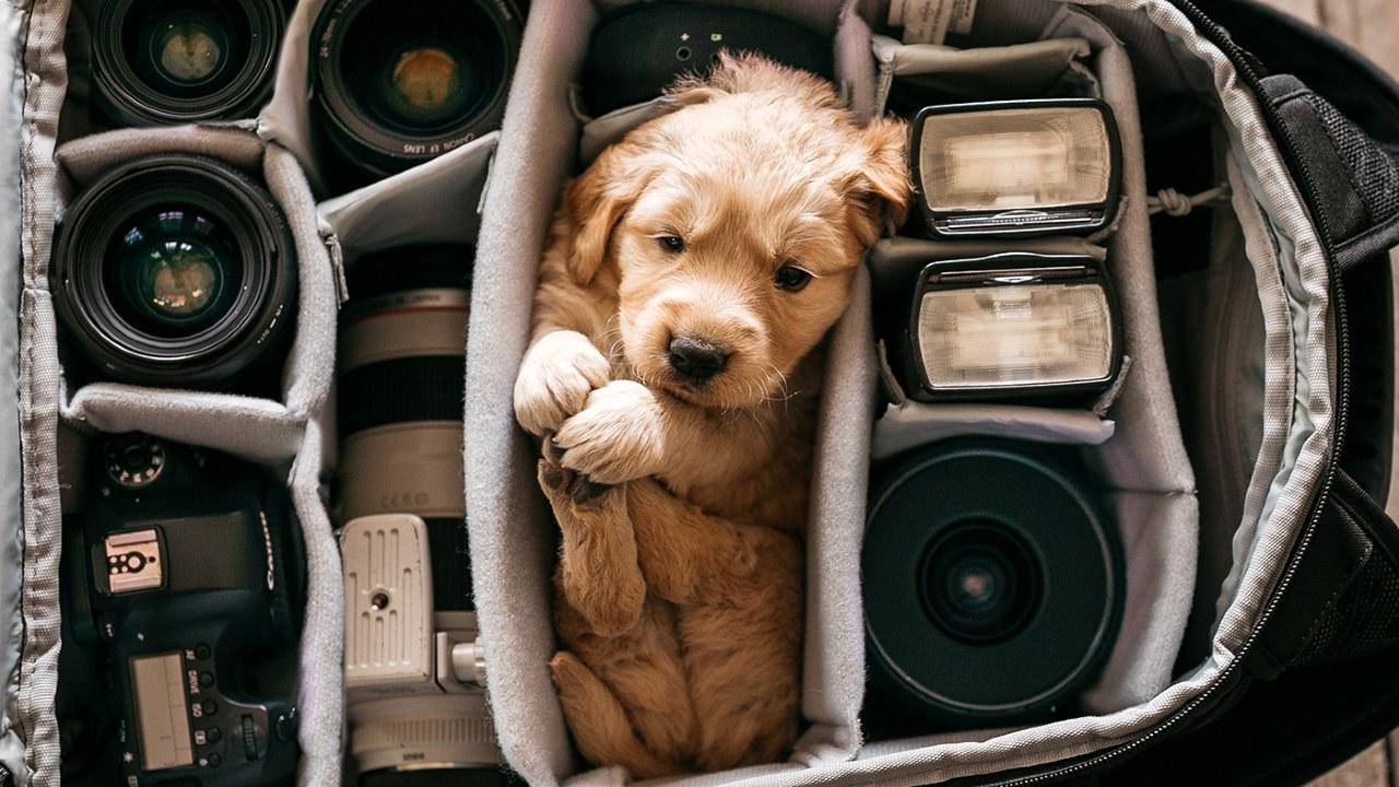 Yavru bir köpek ve fotoğraf makinesi parçaları