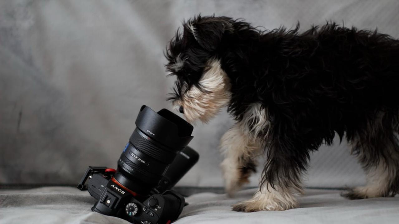 Fotoğraf makinesini inceleyen bir köpek
