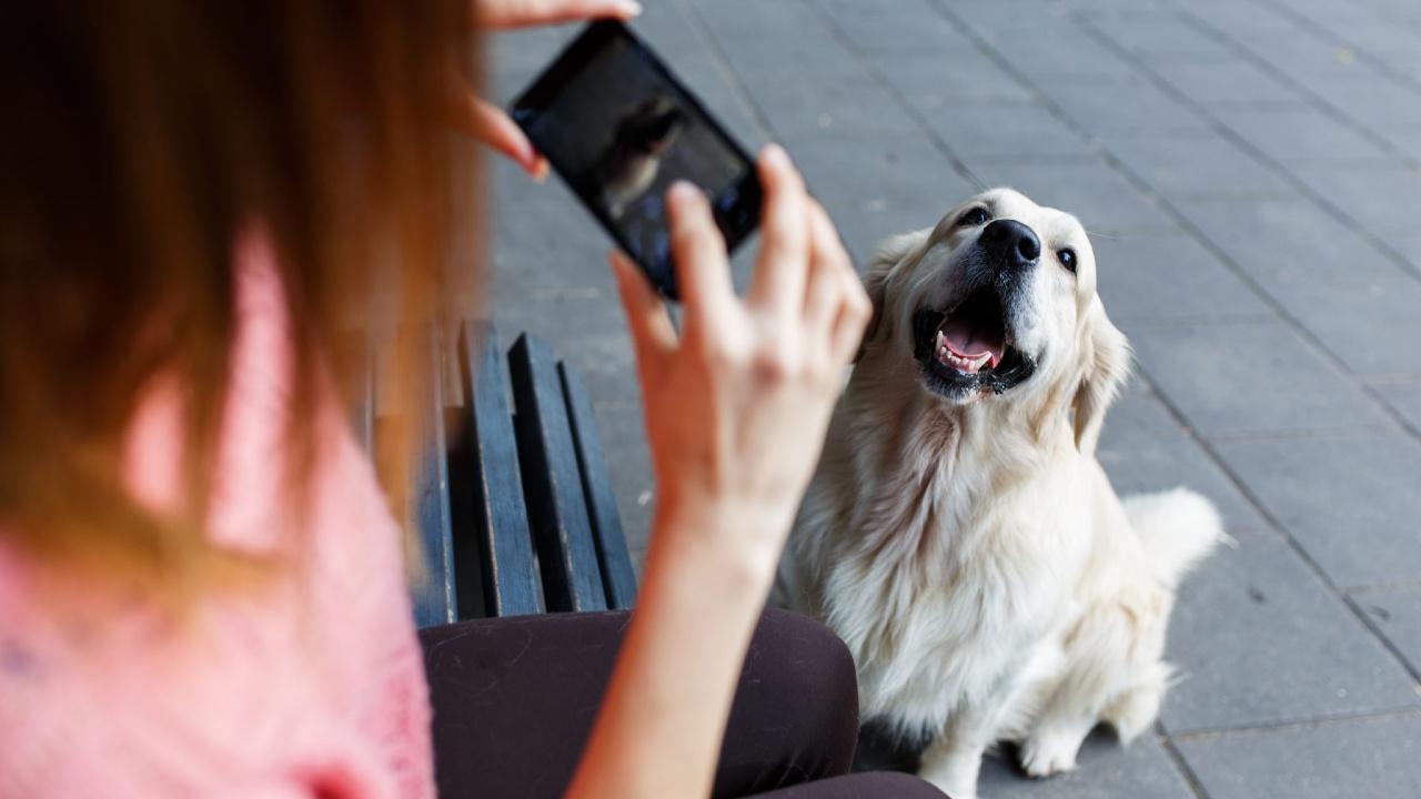 Fotoğrafı çekilen bir köpek