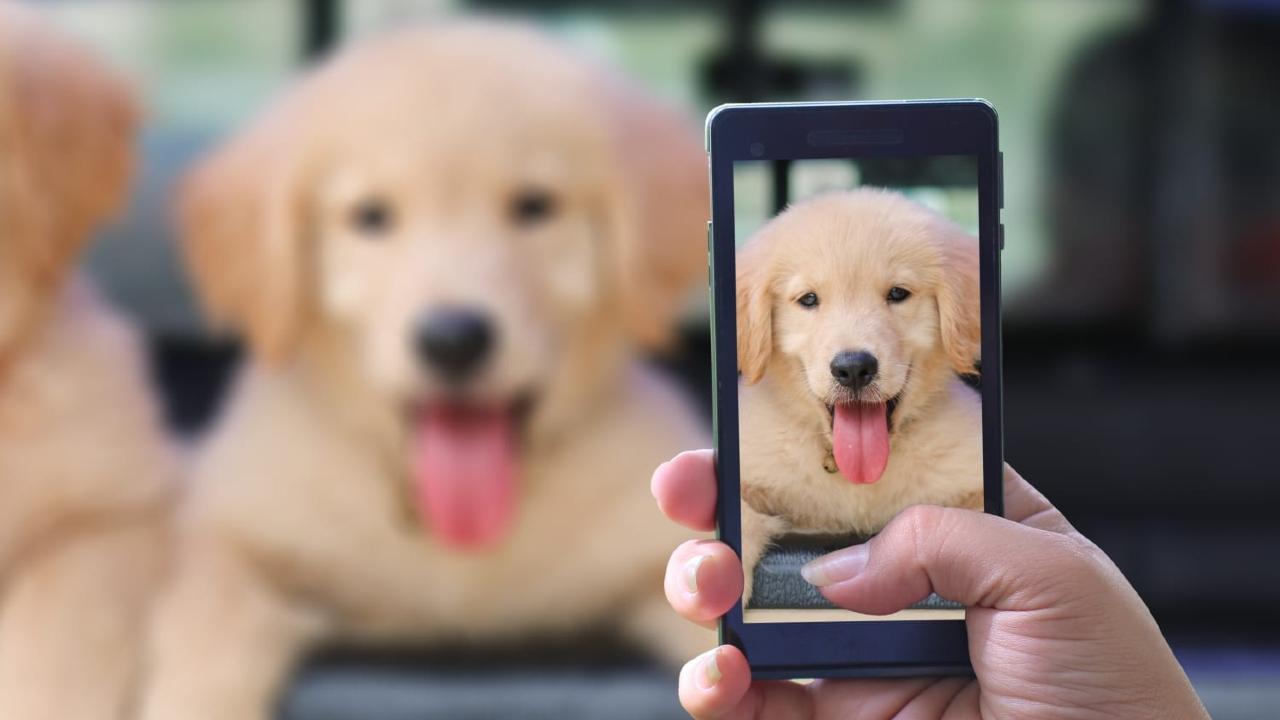Telefon kamerasıyla fotoğrafı çekilen bir köpek