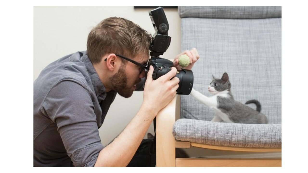 Fotoğrafı çekilen yavru bir kedi