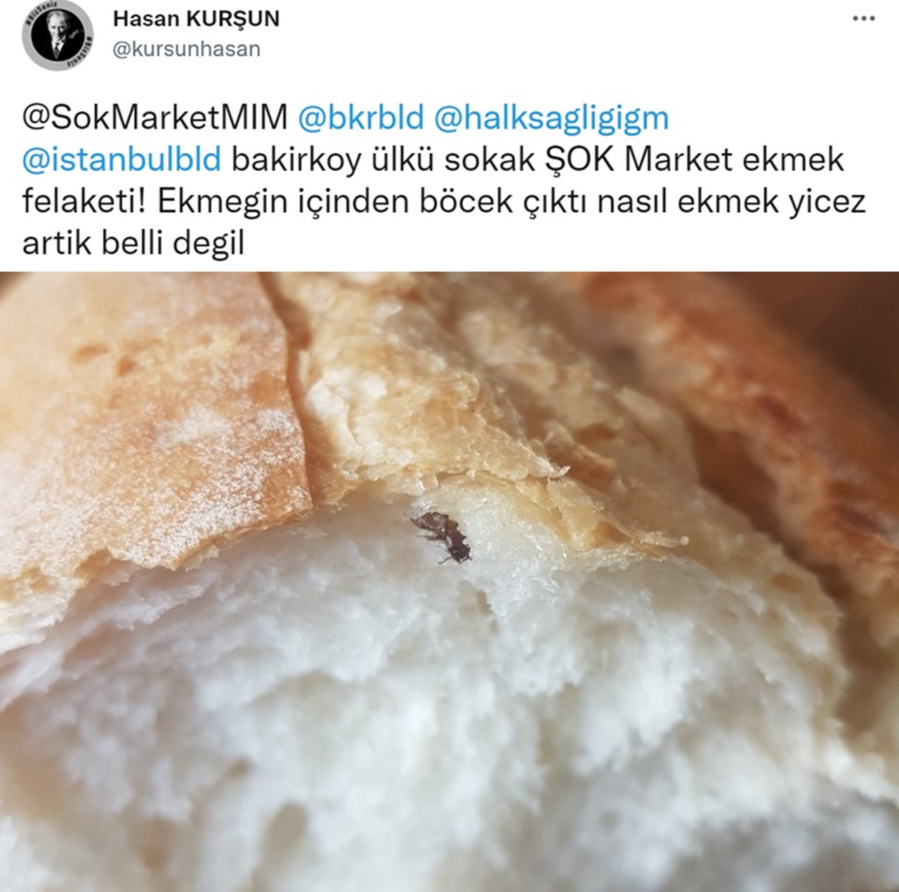 ekmek böcek