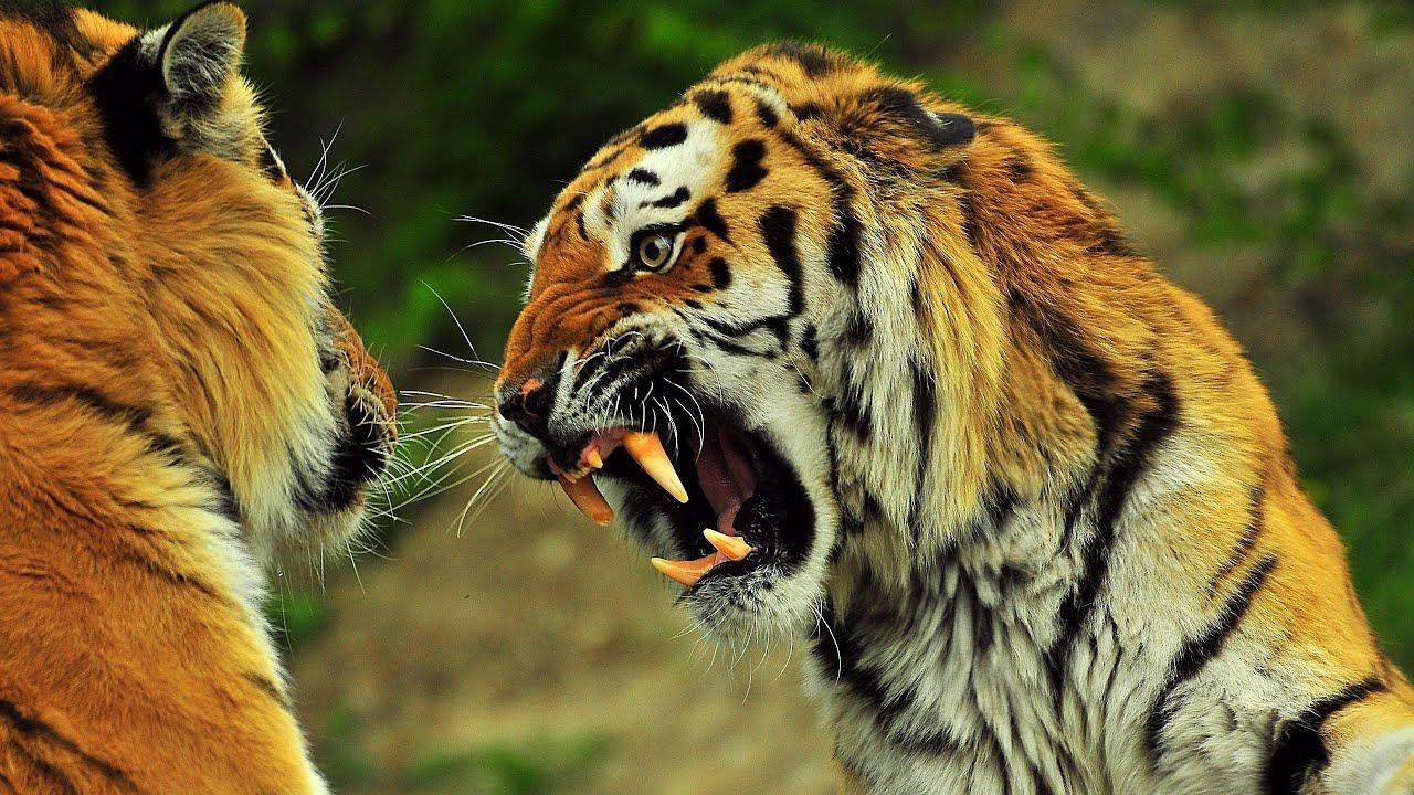 vahşi hayvan